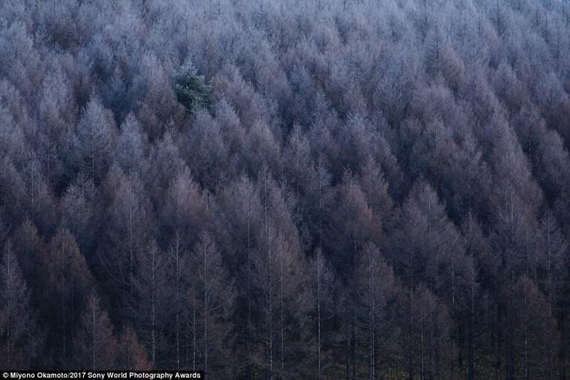 Лес-призрак. Префектура Нагано, Япония искусство, конкурс, красота, фото