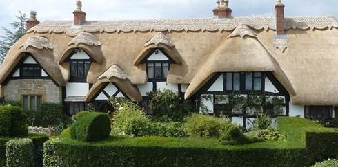 Крыша из камыша: экологически чистая практичная экзотика