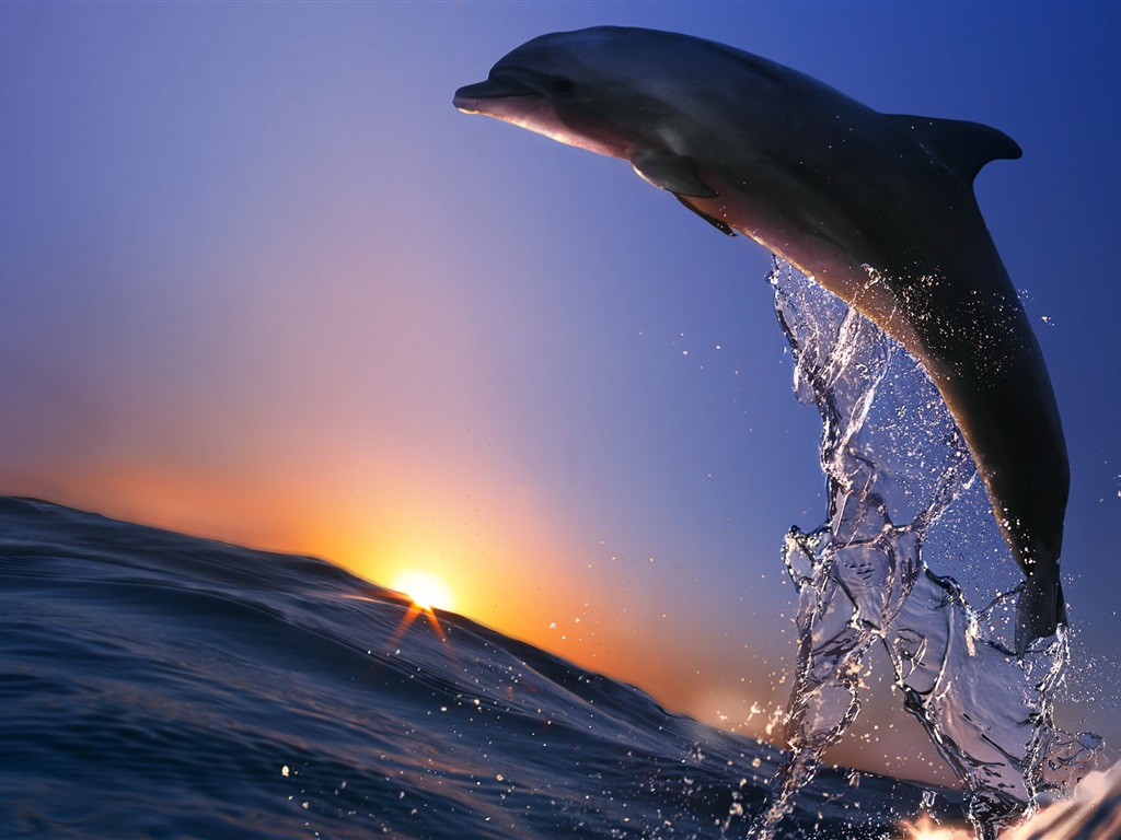 Картинка дельфины выпрыгивающие из воды