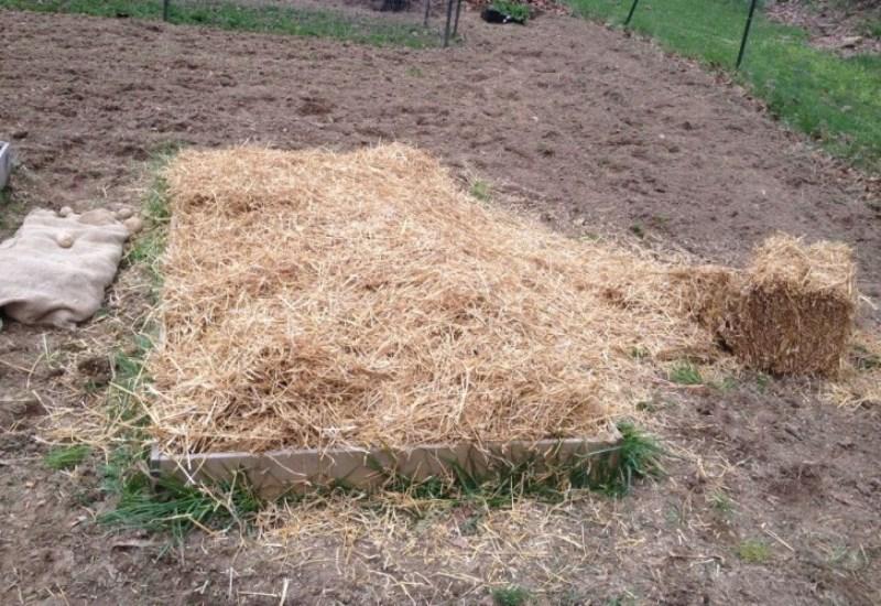 Как посадить картошку под солому