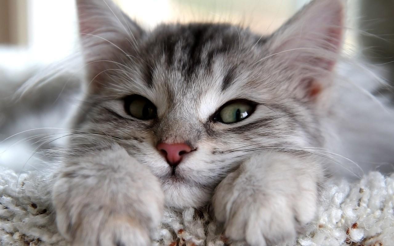 10 кошачьих секретов, о которых не расскажут питомцы, и 5 лайфхаков для хозяев