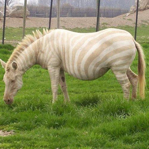 Животные-альбиносы, которые выглядят необычно
