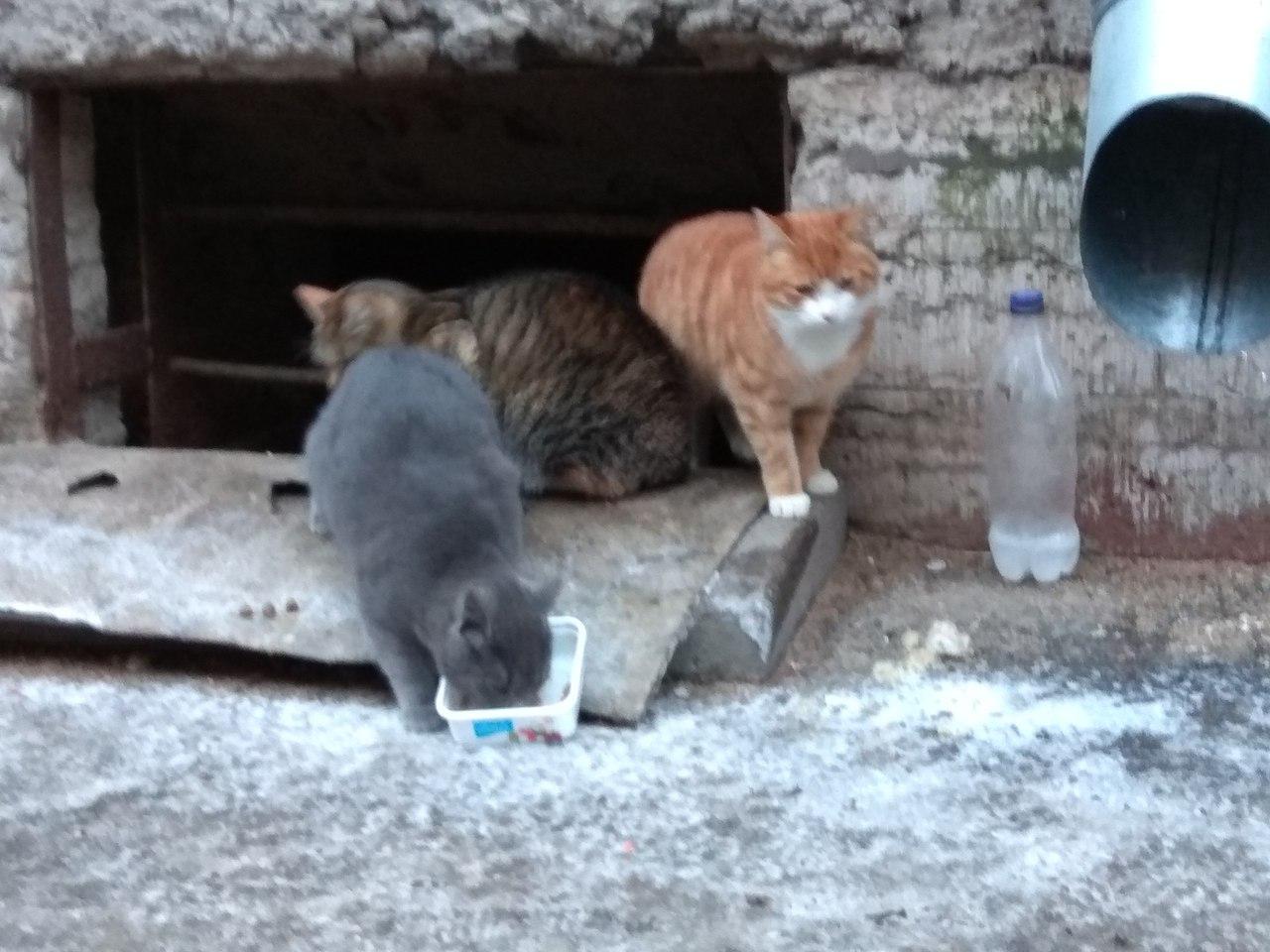 Их жизнь на улице ограничена парой лет.