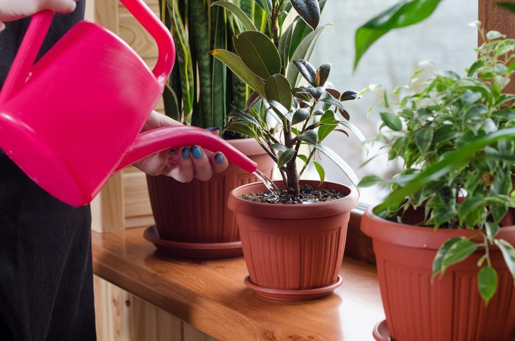 -Хочу себе!-: 4 самых популярных домашних растения -Инстаграма-