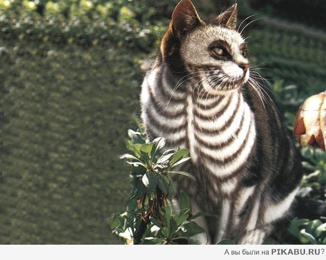 30 животных, которых природа разрисовала с юморком!