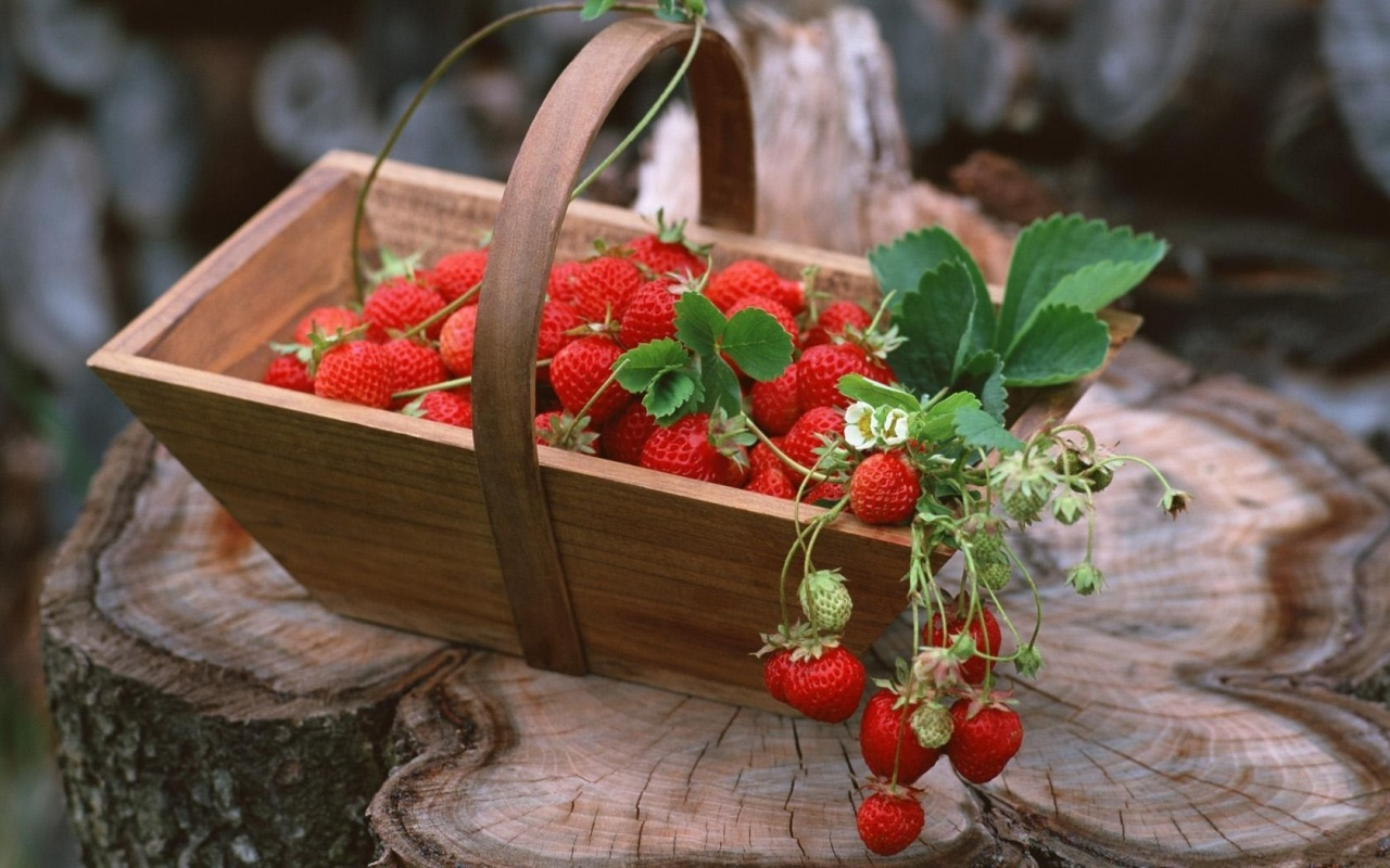 Пять хитростей, которые позволят увеличить урожай земляники в два-три раза