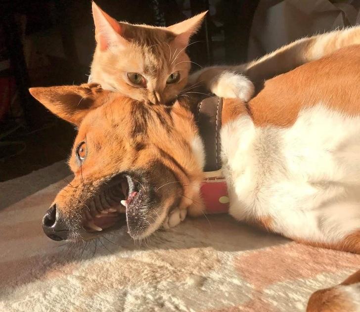 Животные, которые покорят вас своим зверским обаянием