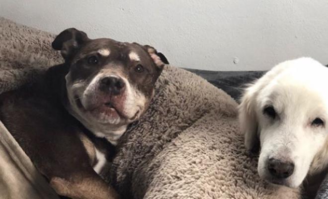 Мужчина решил помочь животным укрыться от урагана и пустил домой 300 собак Культура