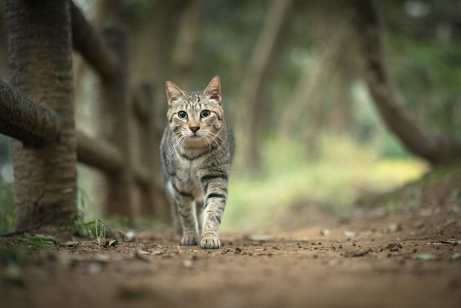 in the woods by Tomomichi Ito on 500px.com