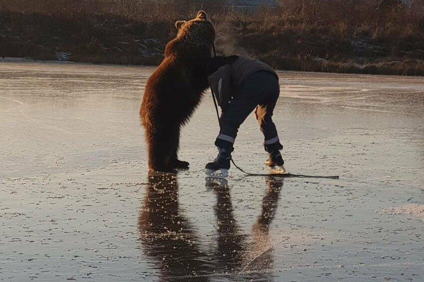 снимке медведь отражающийся на льду фото автор болтнева рассказала, что