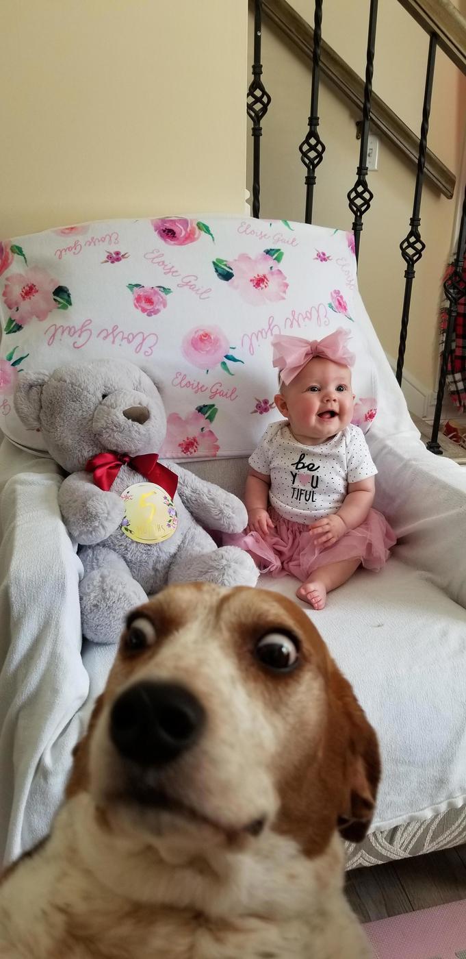 20 смешных животных, которые заслуживают того, чтобы о них рассказали в интернете