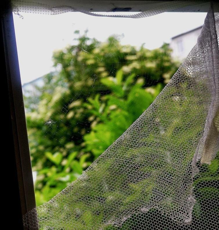 Сломанная москитная сетка исправлена трудолюбивым пауком в мире, вещи, подборка, познавательно, удивительно