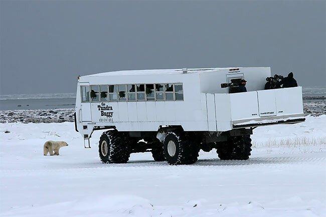 Передвижной отель в тундре: когда твои соседи - полярные медведи туризм