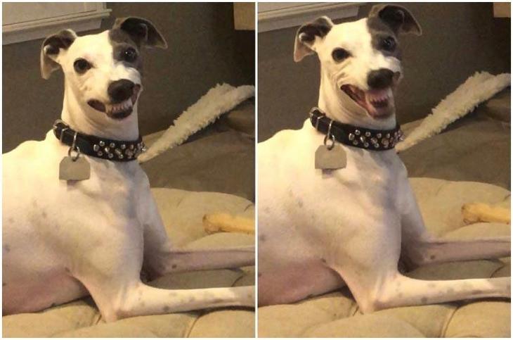 20 смешных животных, которые заслуживают того, чтобы о них рассказали в интернете очень, просто, фотографию, Помимо, после, сфотографироватьЯ, нормально, нереально, ночиЕё, тяжёлой, похожа, нормальную, собака, »Эта, француженок, своих, буханка«Нарисуй, пушистая, выглядит, лапахТак