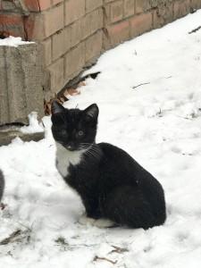 Помогаю спасать котенка!
