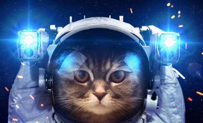 10 животных которые были в космосе