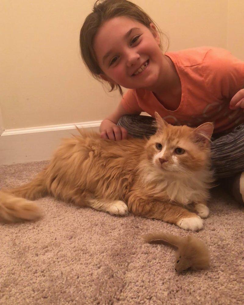 Кот обрёл новую семью в прошлую пятницу и довольно быстро освоился в новом доме в мире, домашний питомец, животные, история, кот, семья