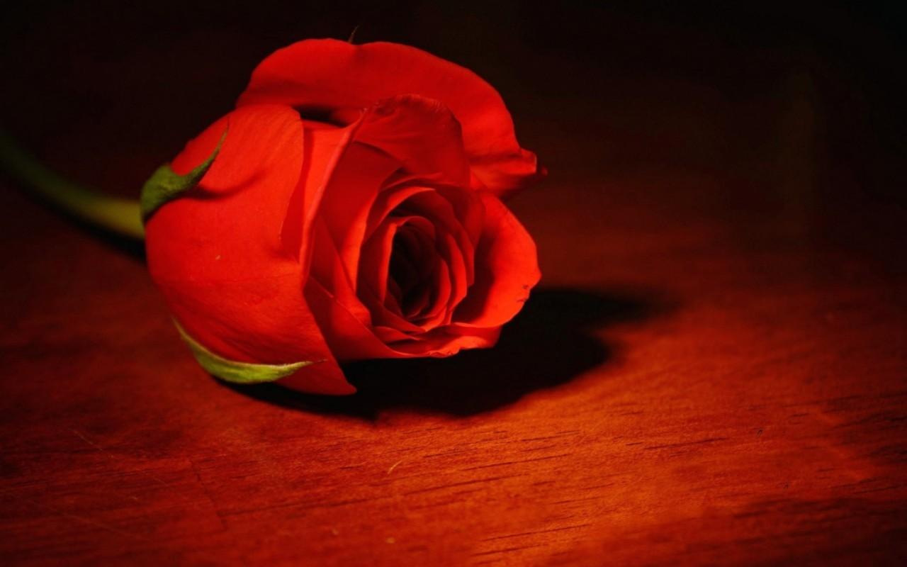 Знаменитости, которые умерли трагической смертью