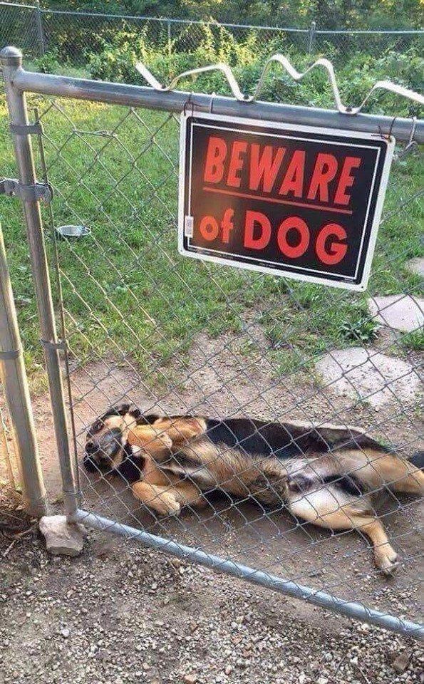 Самые злые и ужасные собачки на охране приколы,смешные картинки,юмор