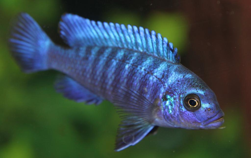 Фото цвета удачи для рыб страсти