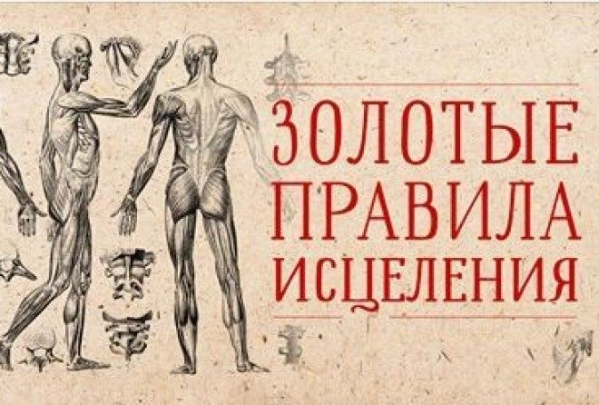 Человеческий организм — сложнейшая из систем.