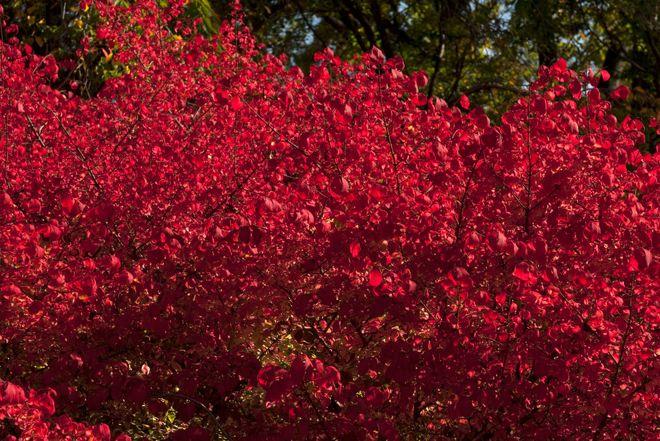 Сад by The New York Botanical Garden