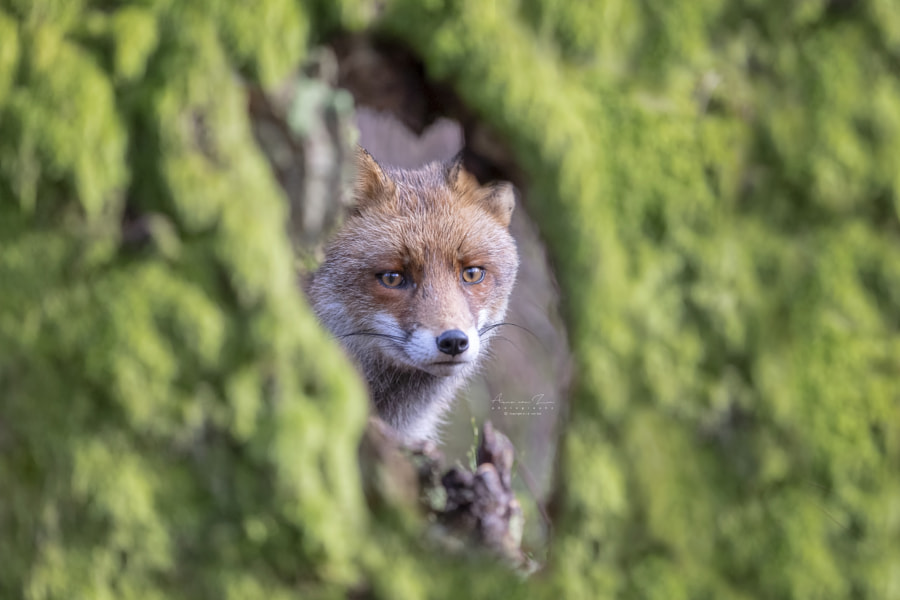 Look through by Arno van Zon on 500px.com