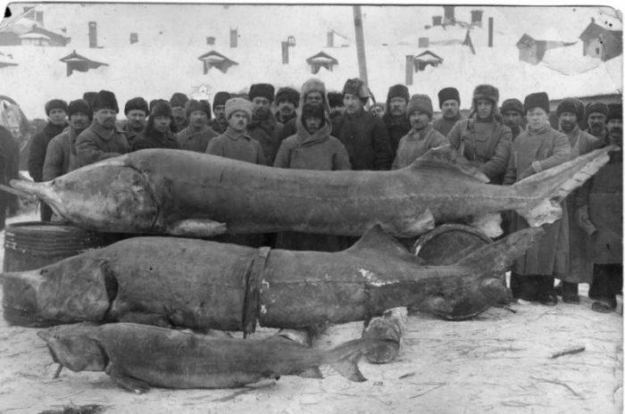 Российские рыбаки: что ловил…