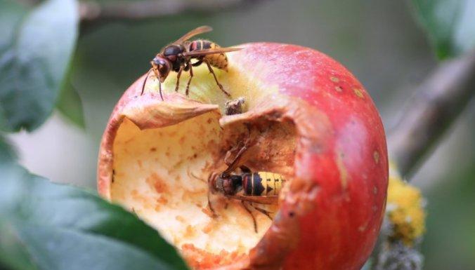 Шмель, пчела или оса залетели в дом: что сулят приметы