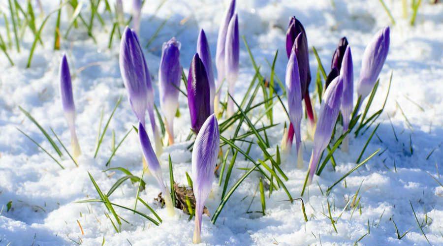 картинки с изображением ранней весны годами
