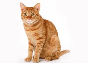 КОШКИН ДОМ. Как определить возраст кошки