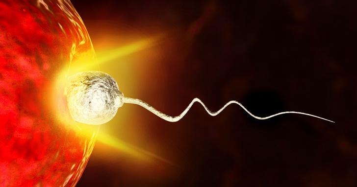 Знаетели вы, что яйцеклетка выбирает сперматозоид, аненаоборот?