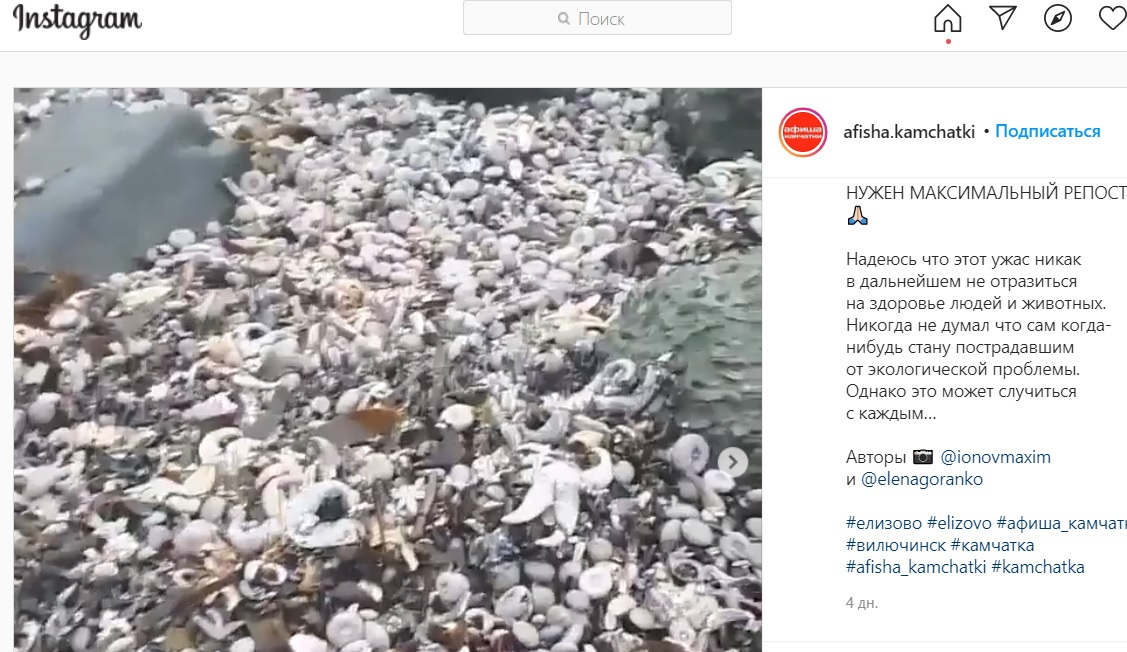 """Политики теряют совесть, туристы – зрение: """"Досадные мелочи"""" на Камчатке стали членовредительством россия"""