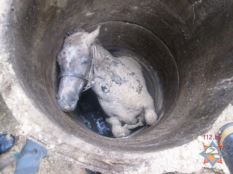 В Ивановском районе спасатели извлекли из заброшенного колодца лошадь