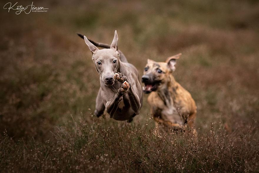 Счастливые летающие собаки: …