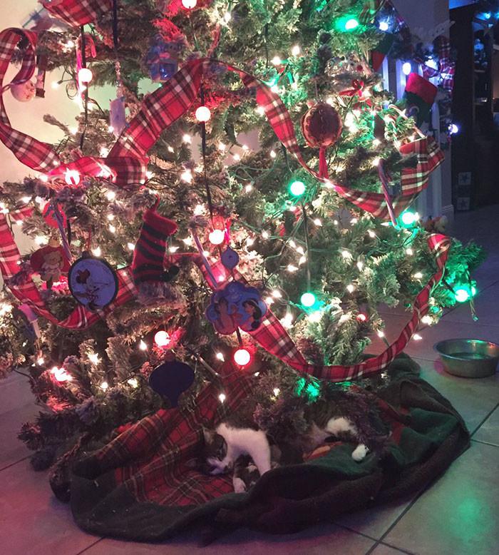 Кошка родила четверых под новогодней елкой, сделав хозяйке лучший рождественский подарок елка, котята, кошка, новый год, рождество
