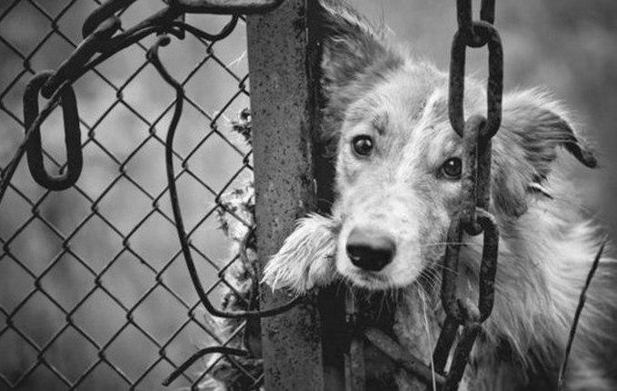 Щемящее стихотворение Роберта Рождественского о собаках, ошейниках и несправедливости...