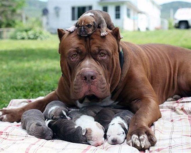 Мамочки и их щенки