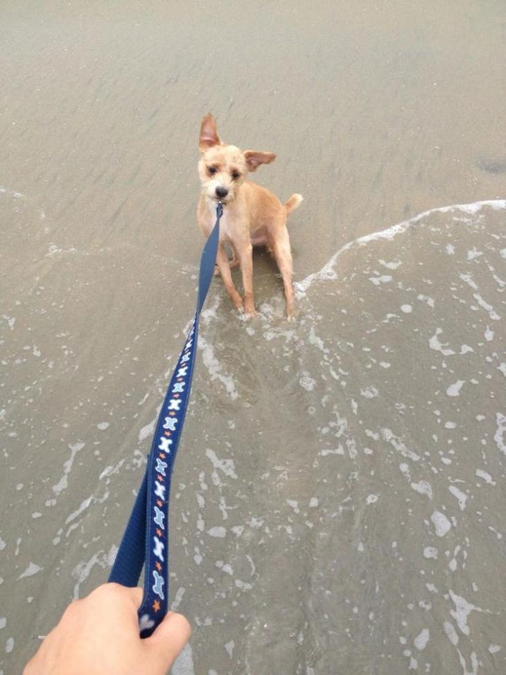 Собаки, которые очень боятся воды картинки,супер