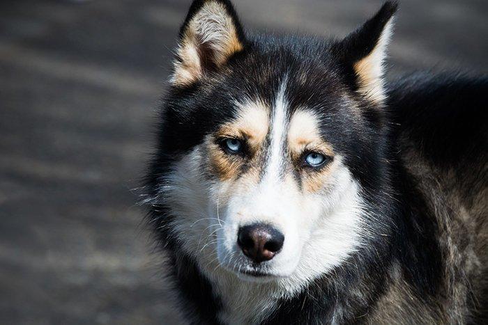 В Антарктиде запрещены ездовые собаки Антарктика, антарктида, интересно, ледяной континент, познавательно, секреты Антарктики, удивительно, факты