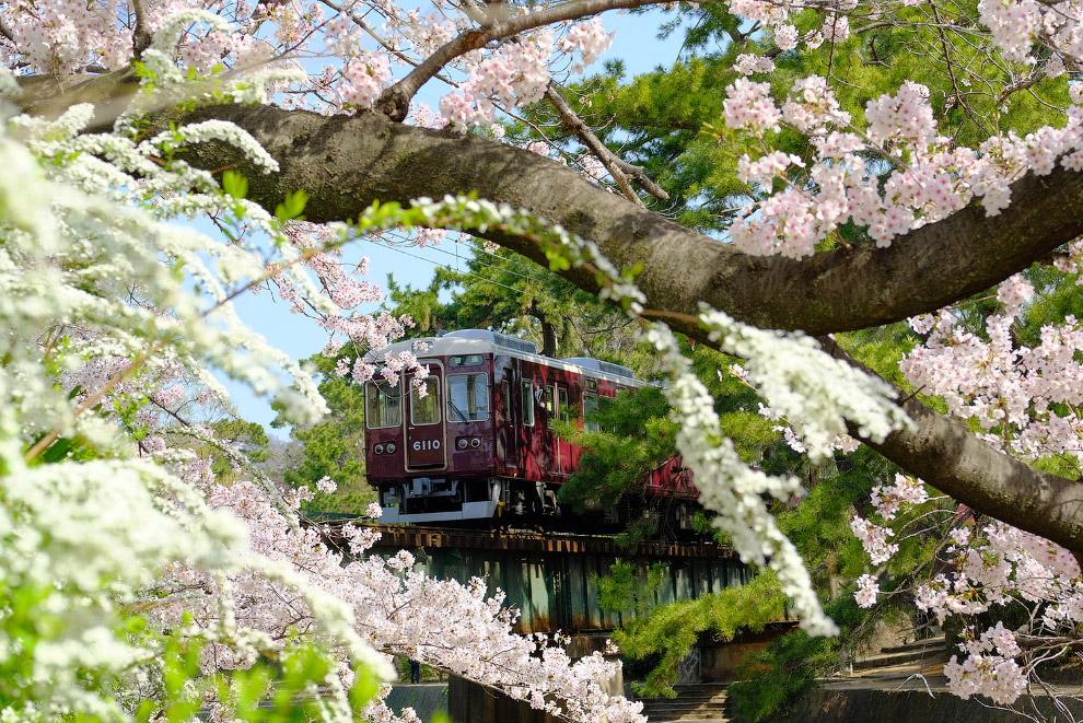 Префектура Хёго, Япония