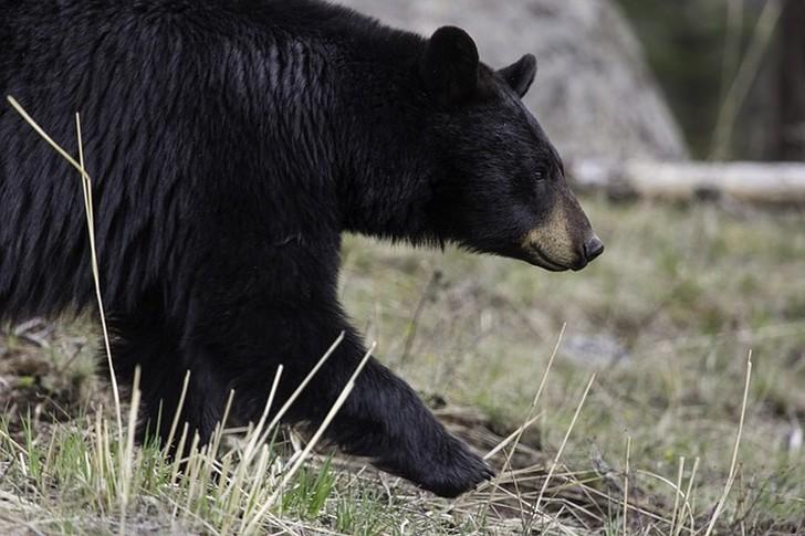 Самое страшное было тогда, когда медведь решил взобраться на меня…