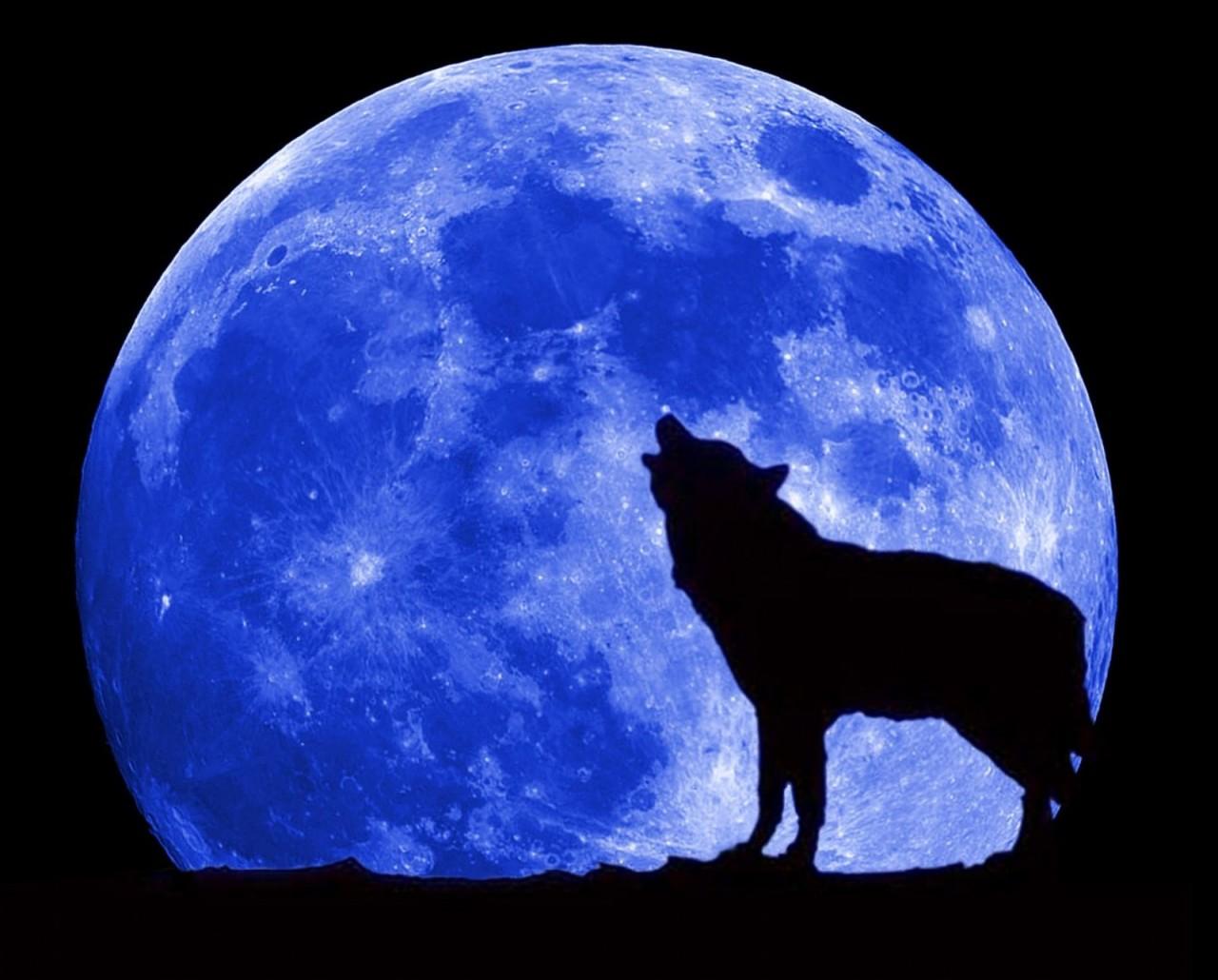 Как вы думаете :  Волков бояться-в лес не ходить ?