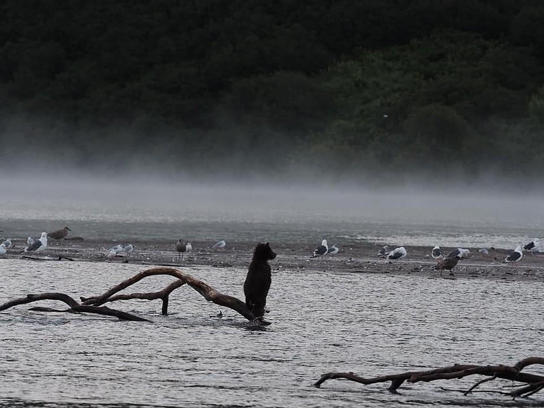 В какой-то момент Кнопка начал стонать детским медвежьи баском. ФОТО: Владимир Омелин.