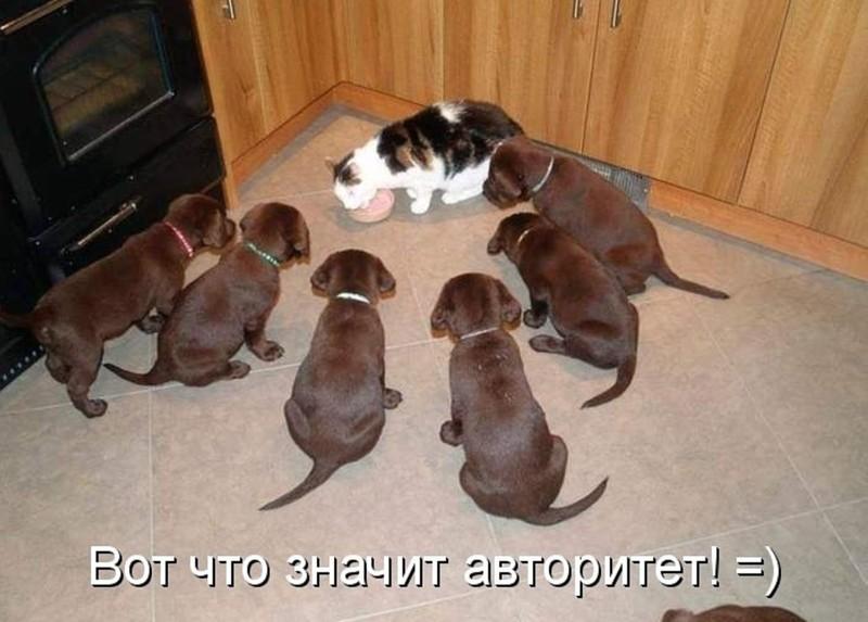 Кошки и собаки. Подборка смешных фотографий