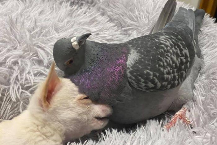 Трогательная дружба возникла между животными моментально.