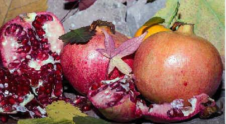 Гранат фрукт полезные ÑвойÑтва_Ð´Ð»Ñ Ð¶ÐµÐ½Ñ‰Ð¸Ð½