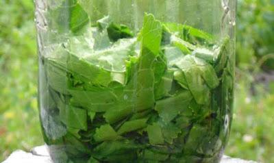 Лечебные свойства и рецепты из листьев хрена