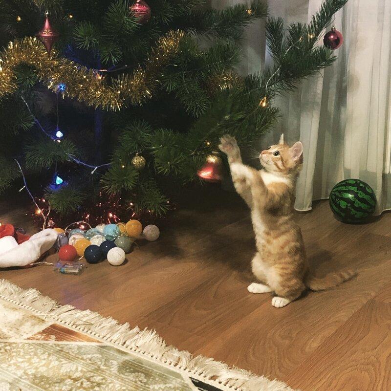 Jingle bells, jingle bells елка, игрушки, кот, новый год, разбой