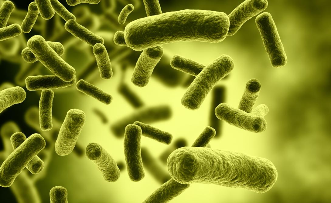 Супербактерии, которых боятся ученые всего мира